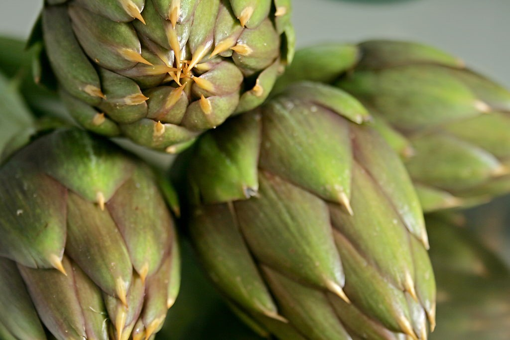 Uri Artichoke Festival in March near our luxury hotels in Sardinia | Essential Italy