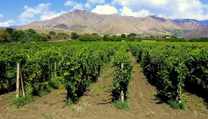 Volcanic vineyard Sicily top wine trends at luxury villas in Italy Essential Italy
