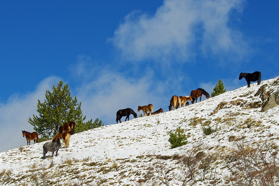 Animals in the Gran Sasso National Park of Abruzzo