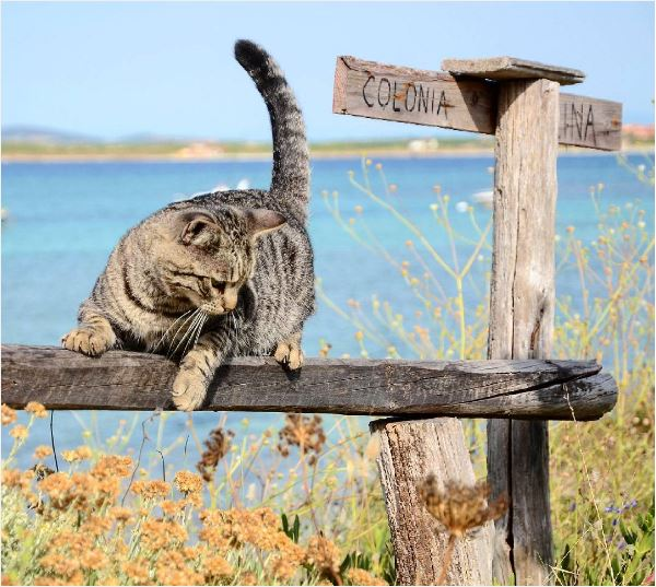 Cat sanctuary on a Sardinia beach near our villas to rent in Italy