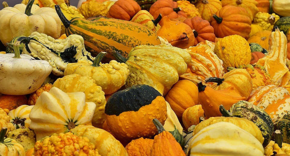 A mixture of pumpkins and squash fruits in Italy