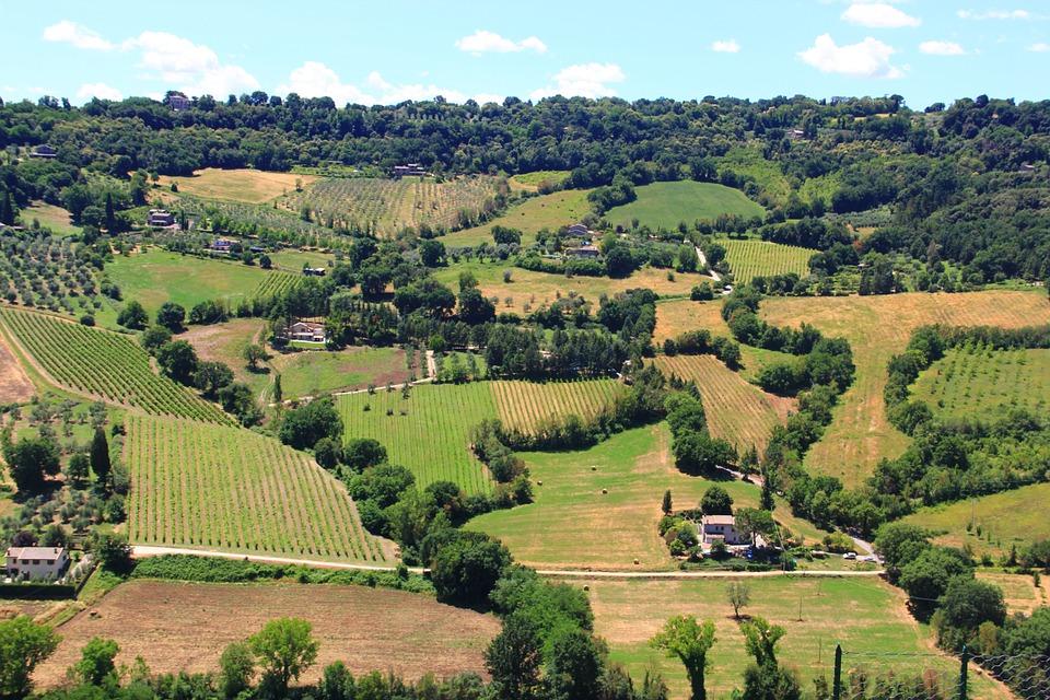 Fields in Orvieto, Umbria
