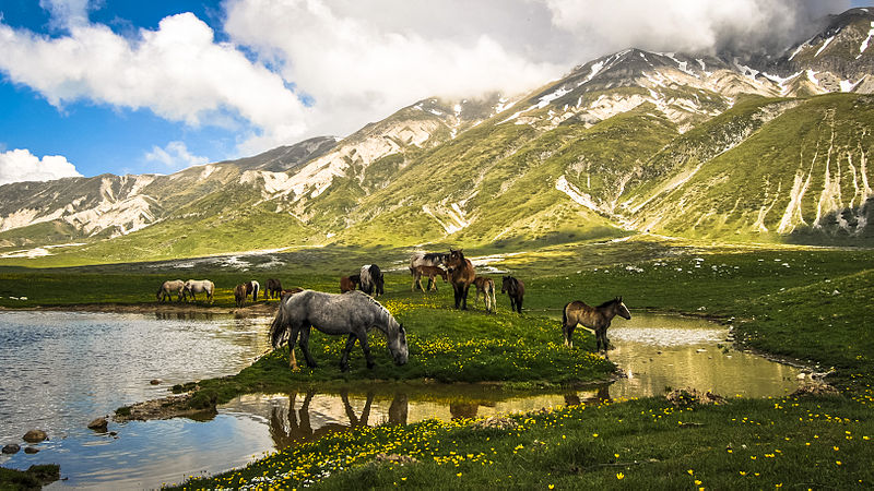 Horses on a field below the mountains near our Abruzzo villas.