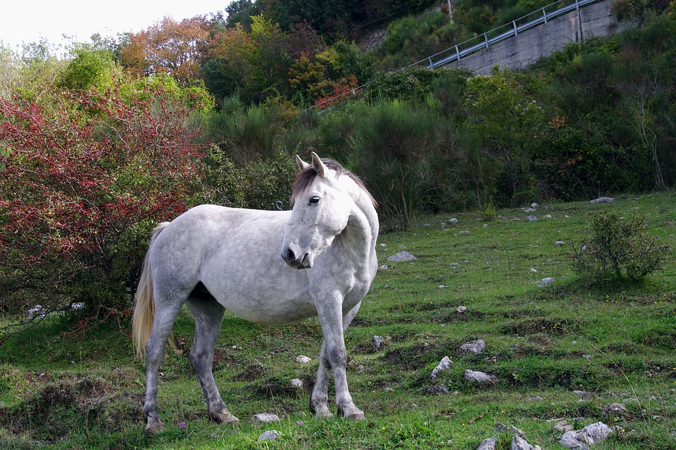 A National Park in Abruzzo with a pony