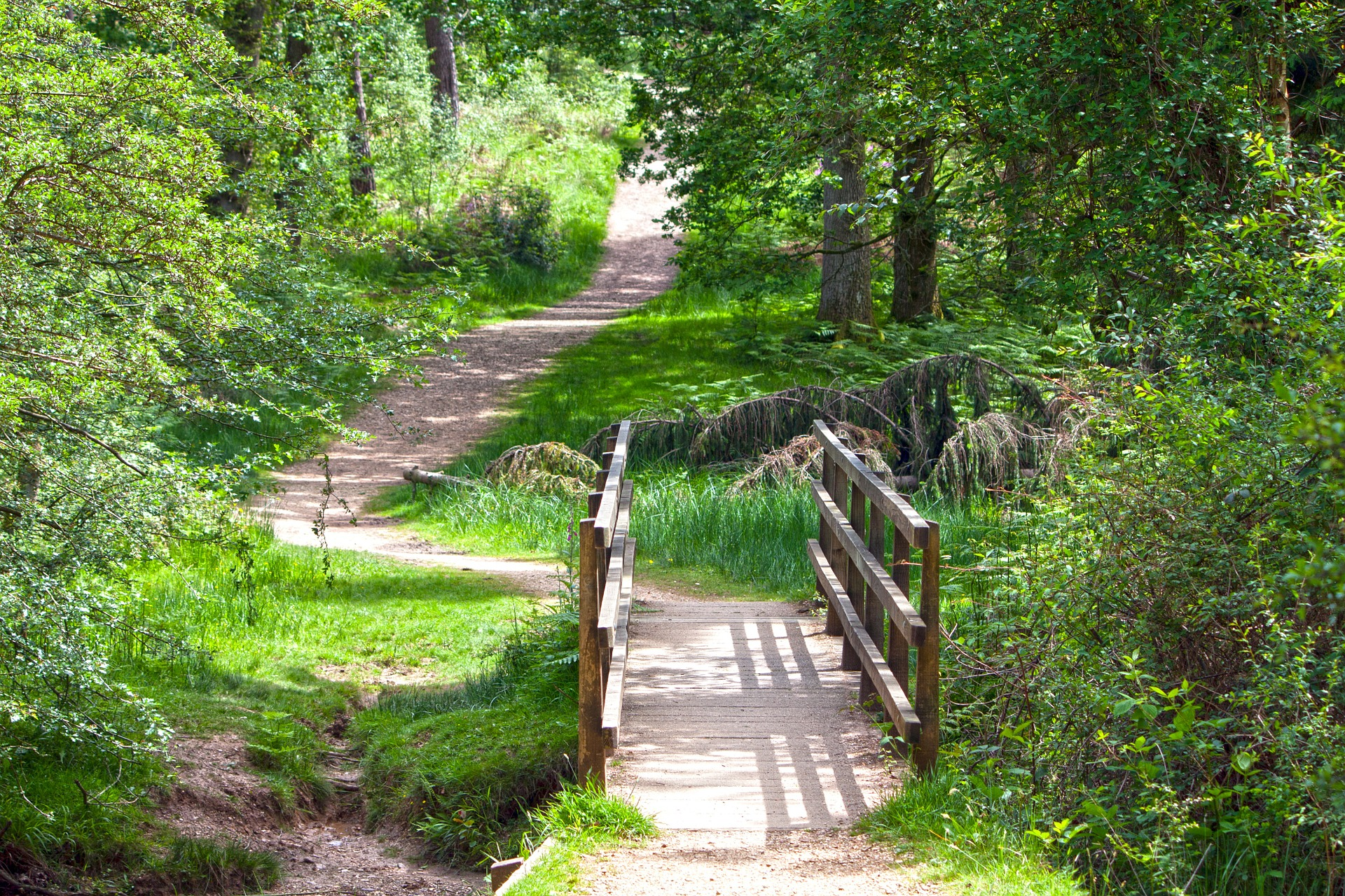 wooden bridge in a woodland