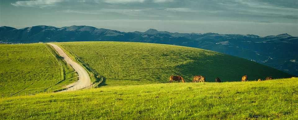 A Sunny field with horses in Umbria, Italy