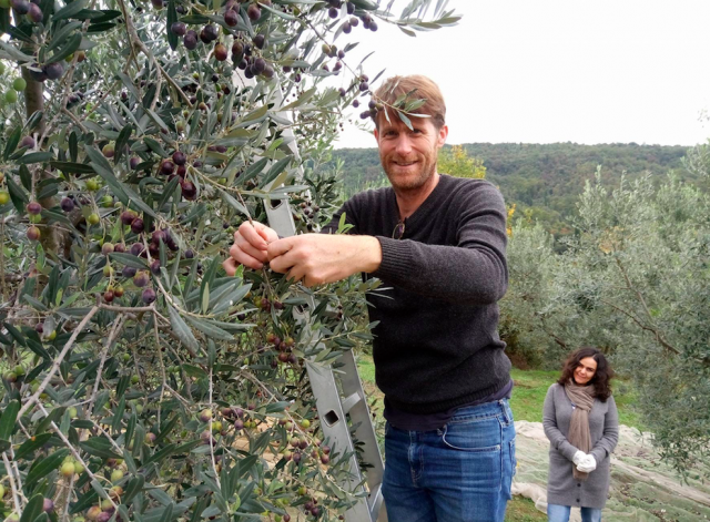 Co-founder, Ian picks olives.