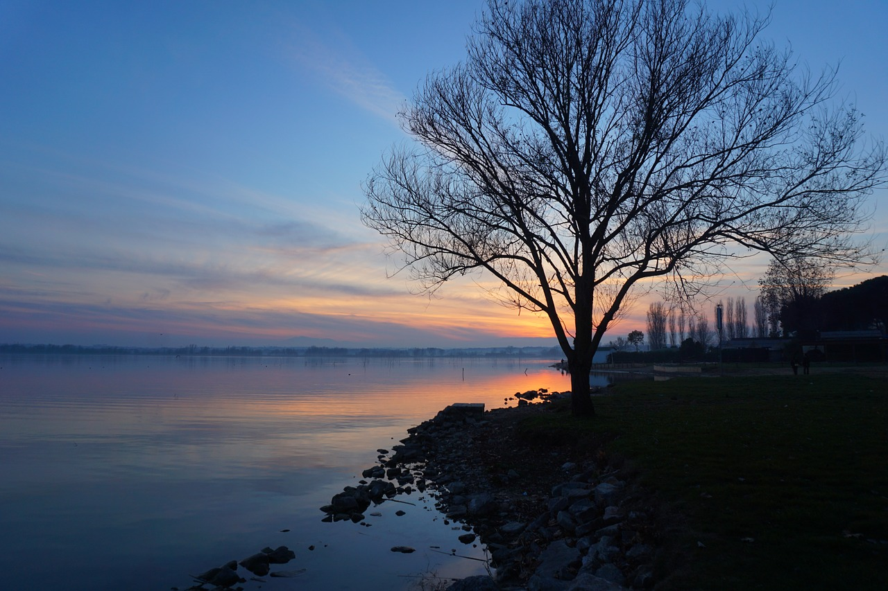 Sunset view of a tree by Lake Trasimeno