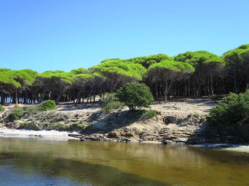 A pine forest in Budoni, Sardinia