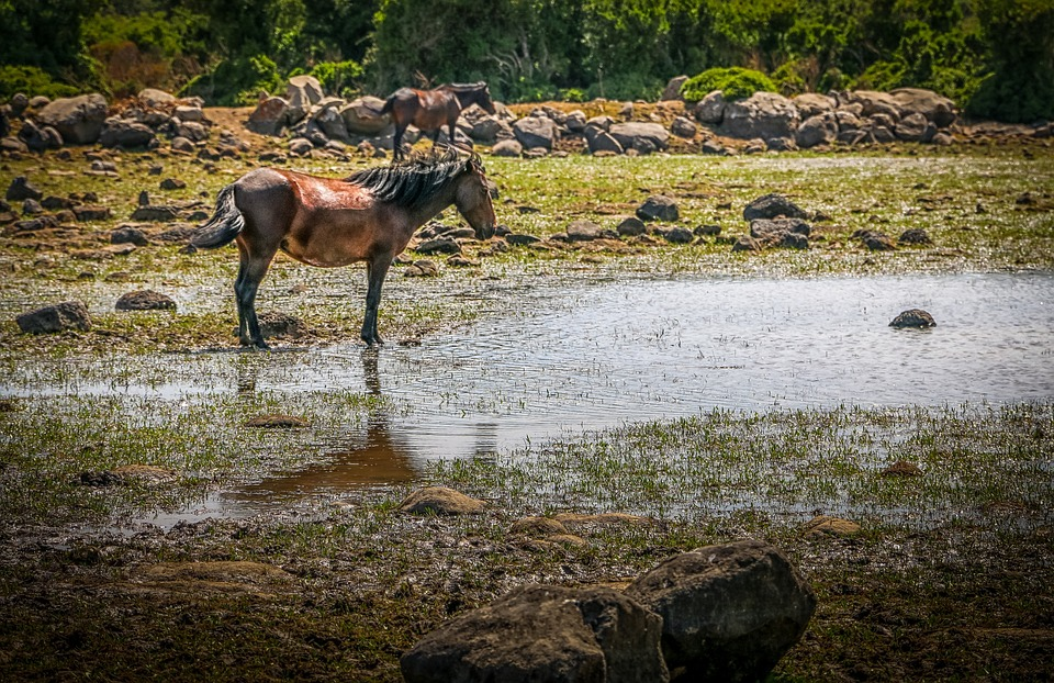 A brown horse standing next to a body of water