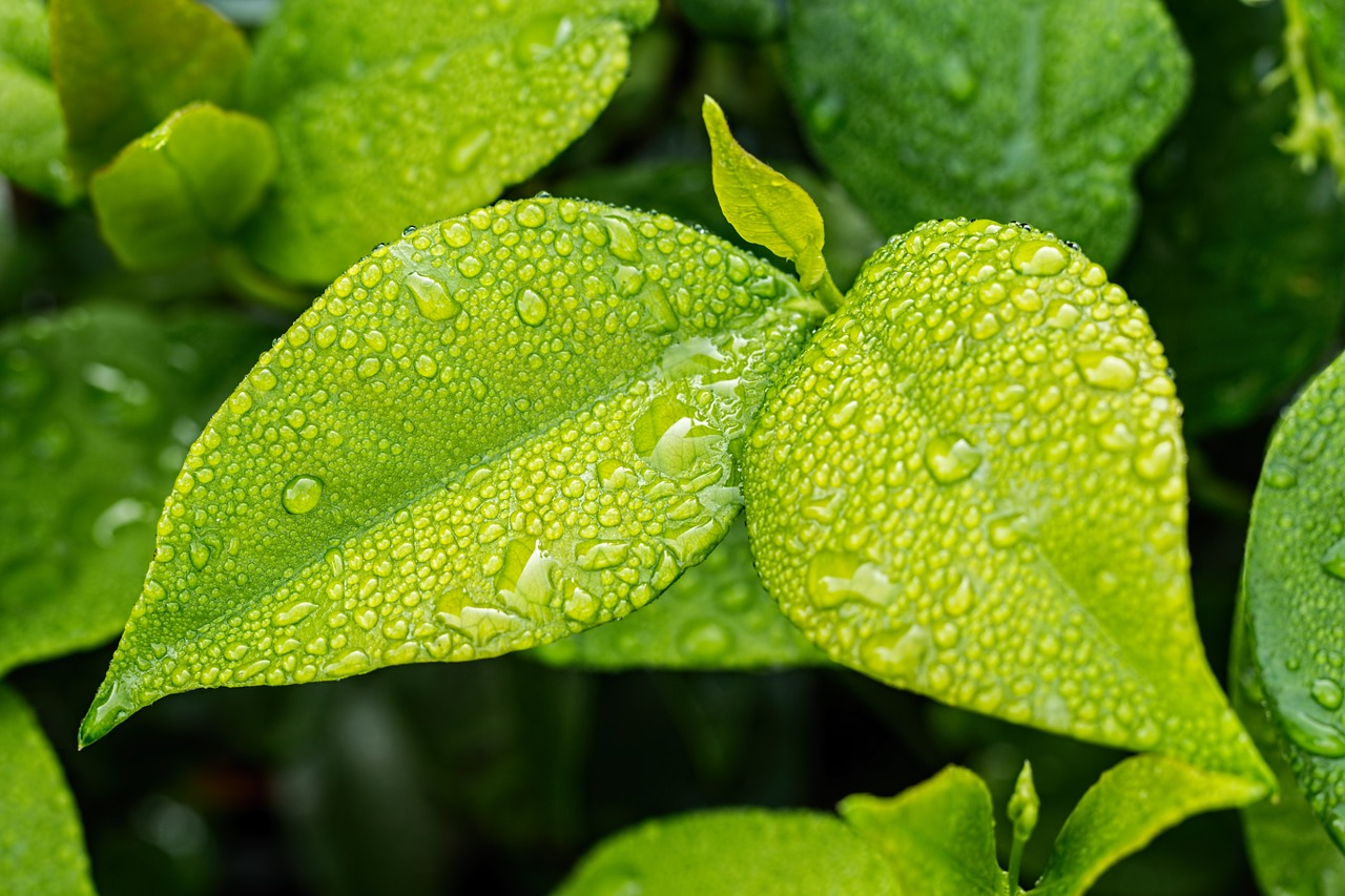 Close up of green plant in rain.